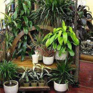 Какие комнатные растения нельзя выращивать в квартире