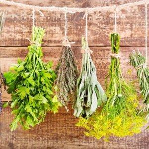 Цветки пряных трав в кулинарии