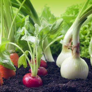Правила посадки овощей