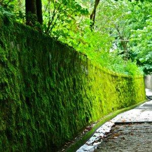 Как самостоятельно избавиться от мха на садовом участке: эффективные способы