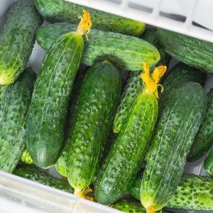Как сохранить свежие огурцы подольше в домашних условиях: срок хранения в холодильнике