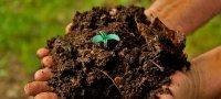 В чем отличие органических удобрений от минеральных - подробный разбор