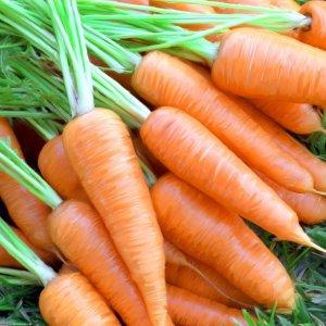 Морковь уход запосевами весной