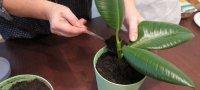 Как правильно сажать растения в горшок