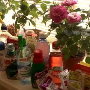Домашние удобрения для комнатных растений