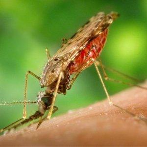 Обработка дачи от комаров