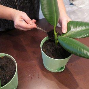 Пересадка комнатных растений и цветов