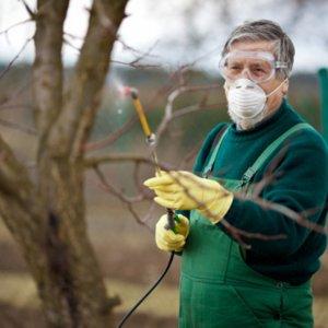 Опрыскивание мочевиной деревьев и кустарников весной и осенью