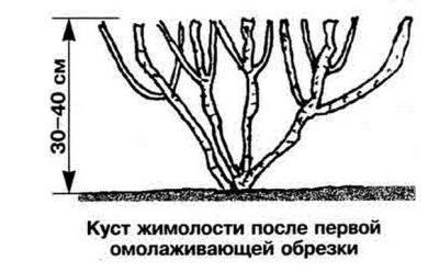 Картинка 6