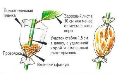 Изображение 10