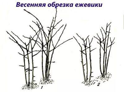 Изображение 2