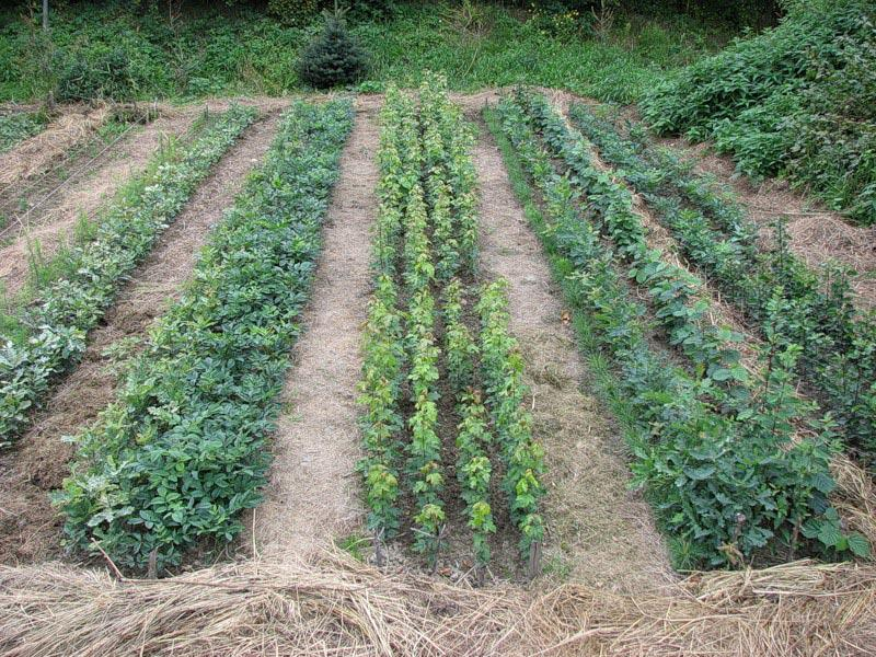 Экологическое земледелие на даче