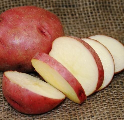 Лучшие сорта картофеля - обзор сортов, отзывы и фото