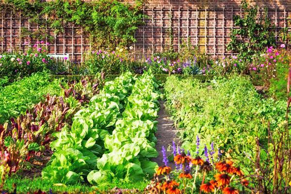 Севооборот огорода