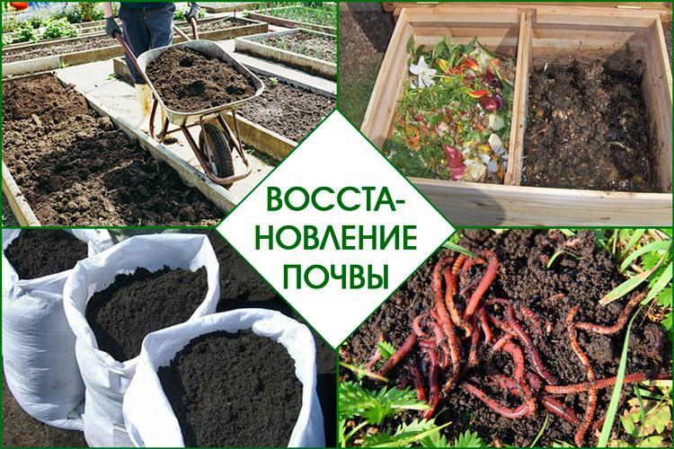Что посадить чтобы не росли сорняки