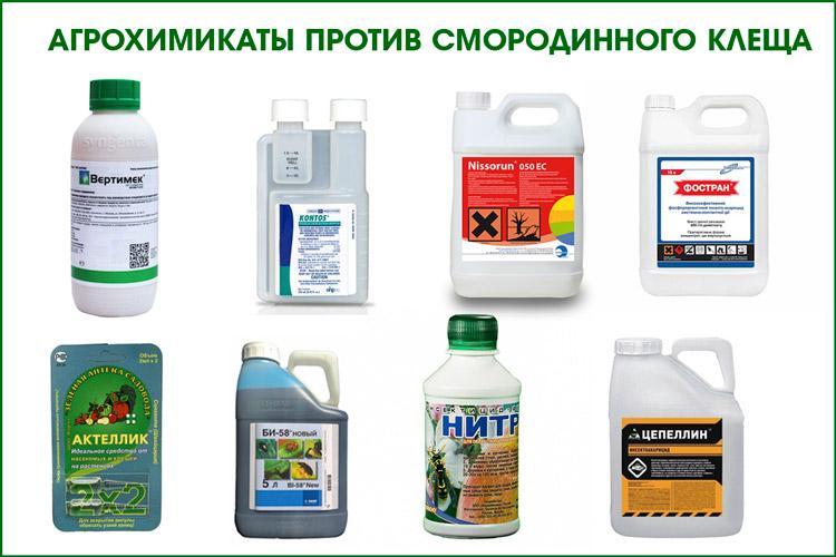 Химикаты от смородинного клеща