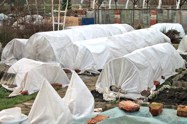 Сад подготовлен к зиме