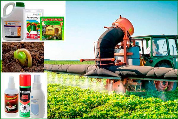 Уничтожение сорной травы с помощью пестицидов