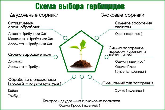 Выбор гербицидов