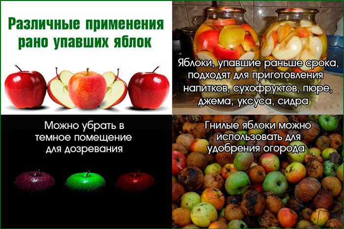 Применение упавших яблок