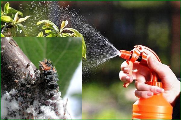 Распыление отравы