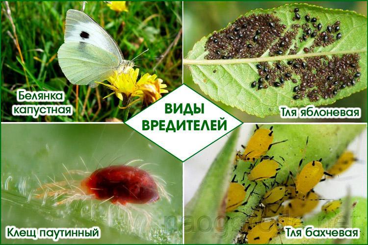 Разновидности насекомых