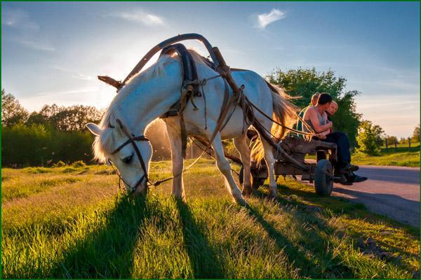 Конь с телегой