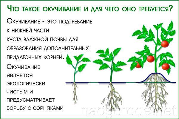 Агротехническая процедура