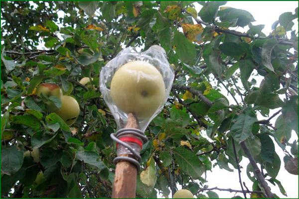 Самодельный плодосборник