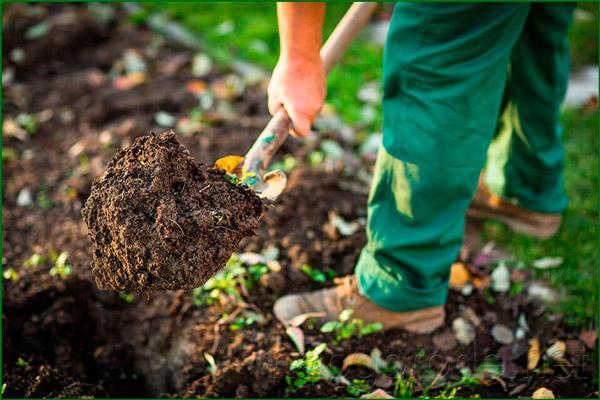 Перекапывание в огороде