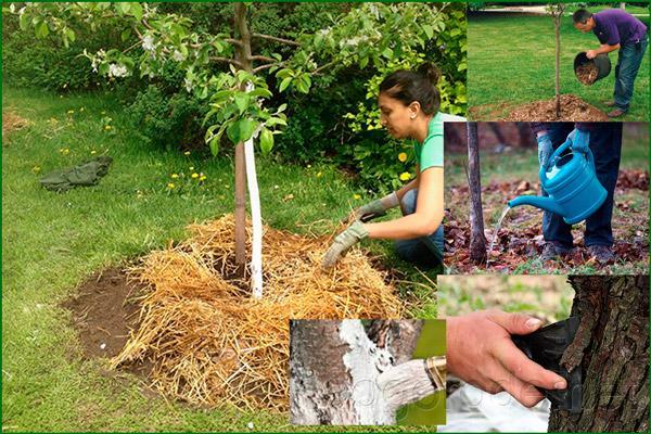 Подготовка дерева к зимовке