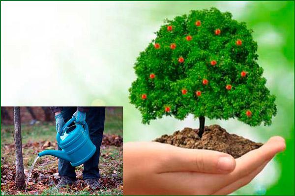 Поливка дерева