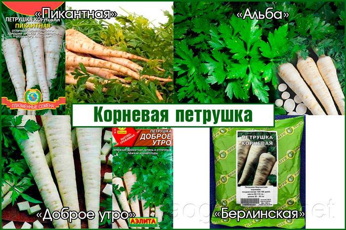 Зелень на зиму