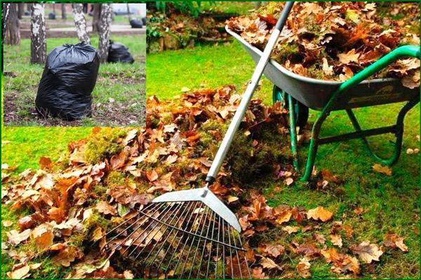 Осенняя очистка территории