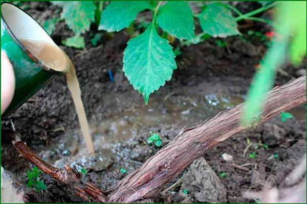 Поливка растения
