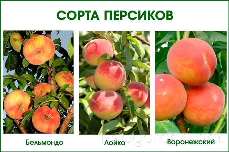 Виды фрукта